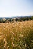 Feld - Muehlviertel, Österreich Lizenzfreie Stockfotografie