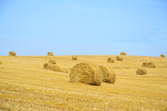 Feld nach Ernte-Stroh Lizenzfreies Stockfoto