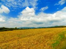 Feld nach Ernte und Wald Stockfoto