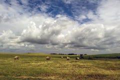 Feld, nachdem Korn vor dem Sturm geerntet worden ist Stockfoto