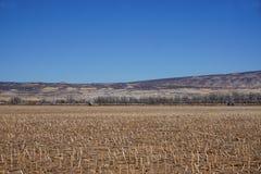 Feld, nachdem Mais geerntet worden ist Stockfoto