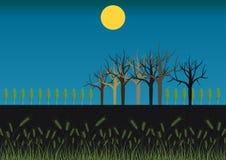 Feld nachts stock abbildung