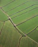 Feld nahe Amsterdam holland netherlands stockfotos