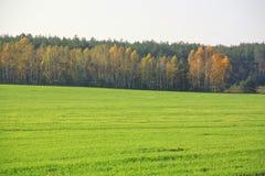Feld nahe Wald Lizenzfreie Stockbilder