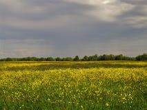 Feld, russisches Feld Stockbilder