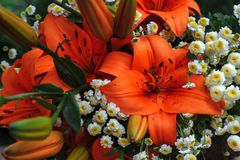 Feld, Sommerblumenstrauß stockfotos