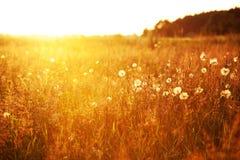Feld am Sonnenuntergang Lizenzfreies Stockfoto