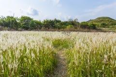 Feld am sonnigen Tag Stockfotografie