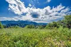 Feld, Straße, Himmel und Blumen Lizenzfreie Stockfotos