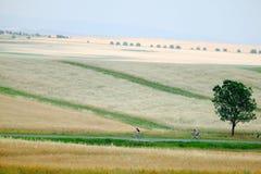 Feld, Straße und Mann und Frau Stockfoto