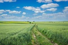 Feld in Ukraine Lizenzfreie Stockfotos