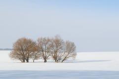 Feld und Bäume im Schnee Lizenzfreies Stockfoto