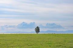 Feld und Baum Stockbild