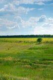 Feld und Baum stockfotos
