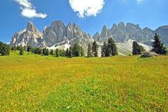 Feld und Berge Blloming Lizenzfreies Stockfoto