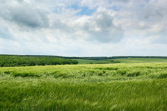 Feld und bewölkter Himmel Lizenzfreie Stockfotos