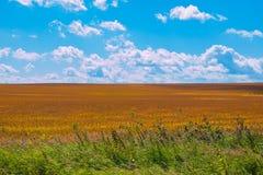 Feld und blauer Himmel am Sommertag stockbild
