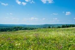 Feld und Bäume Lizenzfreies Stockbild