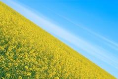 Feld und der Himmel Lizenzfreie Stockfotografie