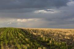 Feld und ein stürmischer Himmel lizenzfreie stockfotos