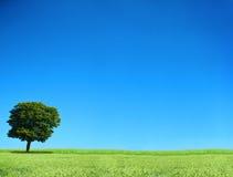 Feld und einsamer Baum Lizenzfreie Stockbilder