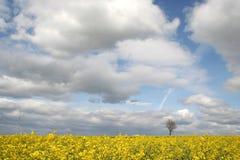 Feld und einsamer Baum Lizenzfreies Stockfoto