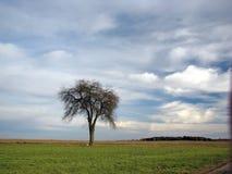 Feld und einsamer Baum unter blauem Himmel Stockfoto