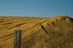 Feld und Fenceline stockfoto