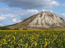 Feld und Hügel der Sonnenblume Stockfotografie