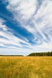 Feld und Himmel Stockbilder