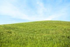 Feld und Himmel Stockfoto
