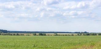 Feld und Himmel Lizenzfreies Stockbild
