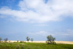 Feld und Himmel Lizenzfreies Stockfoto
