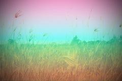 Feld und Himmel Stockfotografie