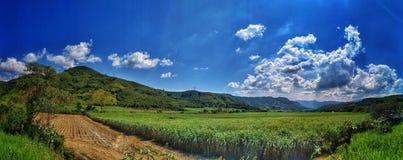 Feld und Himmel Korn stockfotografie