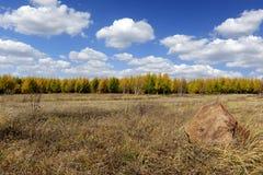 Feld- und Kiefernwald mit bewölktem Himmel im Herbst Stockfotografie
