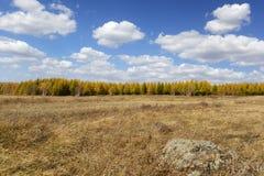 Feld- und Kiefernwald mit bewölktem Himmel im Herbst Lizenzfreie Stockfotografie