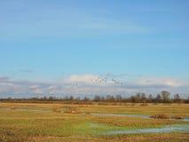 Feld und netter Himmel mit Fliegenvögeln, Litauen Stockfotografie