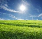 Feld und Sonne Stockfotografie
