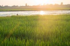 Feld und Sonne morgens Stockbild