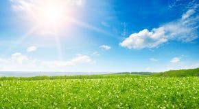 Feld und Sonnenaufgang der grünen Erbse im blauen Himmel Breites Foto lizenzfreie stockfotografie