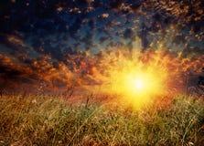 Feld und Sonnenuntergang stockbild