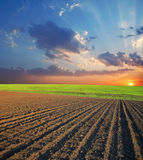 Feld und Sonnenuntergang Stockfotografie