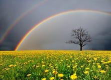 Feld und toter Baum unter bewölktem Himmel mit Regenbogen Stockfotografie
