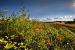 Feld- und Wiesenblumen Stockbild
