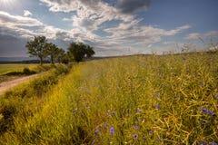 Feld- und Wiesenblumen Stockfotos