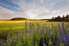 Feld- und Wiesenblumen Holubice Lizenzfreies Stockbild