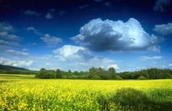 Feld und Wolken Lizenzfreie Stockbilder