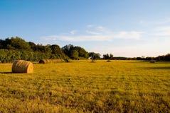 Feld unter blauem Himmel Lizenzfreie Stockbilder