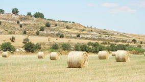 Feld unter blauem Himmel in Larnaka, Zypern Ländliche Landschaft mit goldenen Heuschobern am idyllischen sonnigen Tag stock video